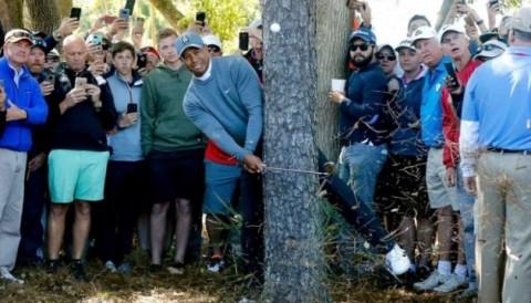 Tiger Woods khiến khán giả điên cuồng tại vòng 1 Valspar