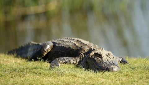 Một phụ nữ bị cá sấu dìm chết khi cố gắng cứu chó của mình